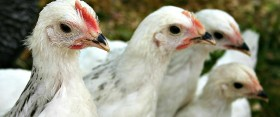 I demand you ooh and aah